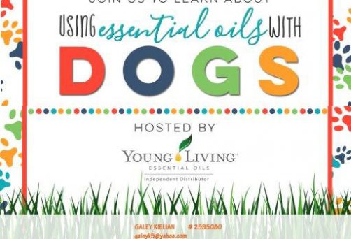 Using Essential Oils with Dogs